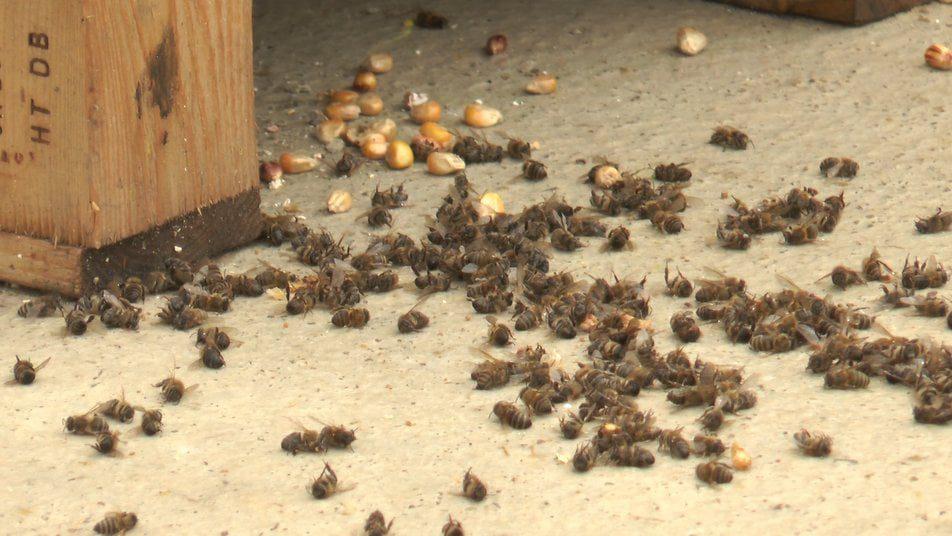 прикарпаття може залишитись без меду